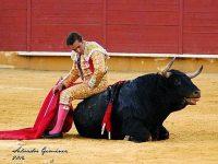 fandi subido al toro